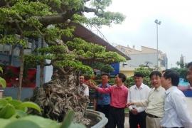 Triển lãm cây cảnh ở Văn Giang