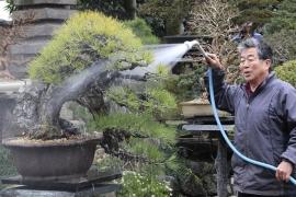Vườn Bonsai của Nghệ Nhân Kobayashi