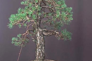 Làm cây theo phong cách tự nhiên (Phần 1)