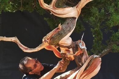Làm lũa cây duyên tùng