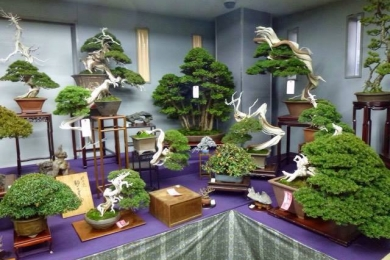 Thăm vườn bonsai Nhật Bản P1