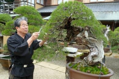 Phỏng vấn Ngài Kobayashi về Bonsai