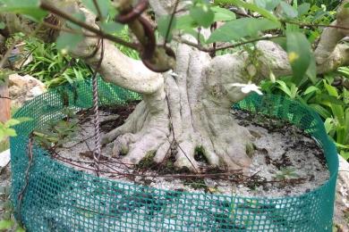 Đất trồng Bonsai (BONSAI SOIL)