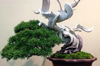 Tour tham quan vườn Bonsai Nhật Bản