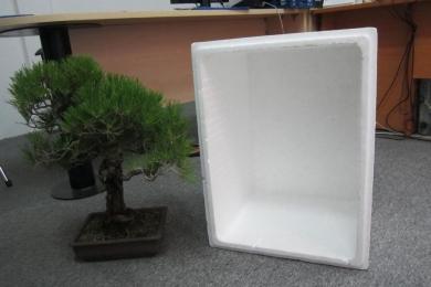 Cách đóng thùng cây Bonsai gửi đi xa